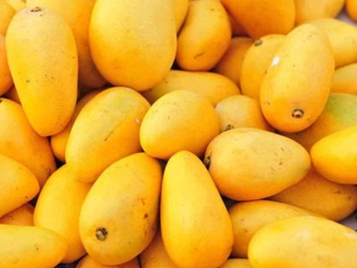 MRI official says online mango trade offers handsome profit to growers