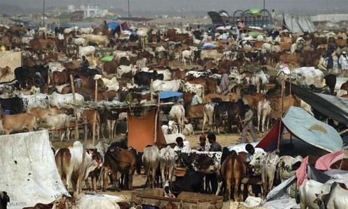 Covid vaccination of animal sellers mandatory: NCOC
