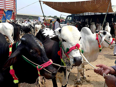 Citizens gear up to finalise Eid shopping, buying animals
