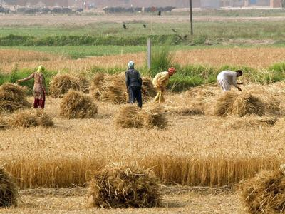 Crop sowing lags in India, raising concerns over food grain output