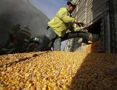 Corn, soybeans lower as extended weather shows dryness easing