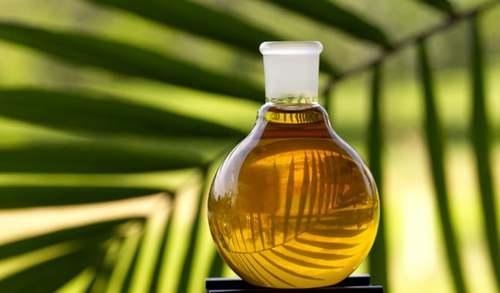 Palm rises, weak August exports limits gains