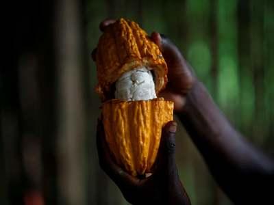 London cocoa hits six-month high, raw sugar slips