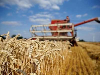 Wheat: no fun in saying told you so