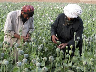India seizes $2.7bn Afghan heroin haul amid Kabul takeover chaos