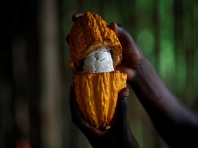 Cocoa hits two-week lows; sugar and coffee fall