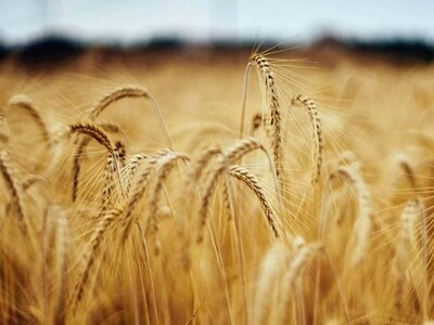 Wheat at 2-week top on supply woes, soybeans up for 6th session