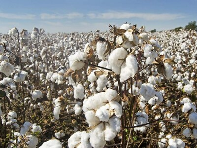 Weekly Cotton Review: Bullish trend prevails in cotton market
