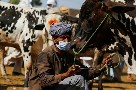 Cattle distributed among poor farmers