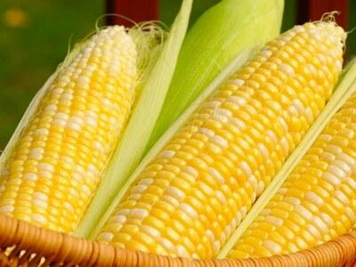 Corn harvest advances, yields edge higher
