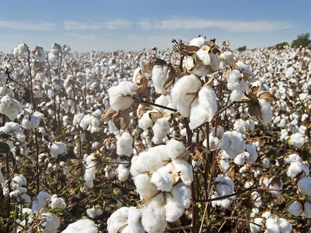 NY cotton futures gain