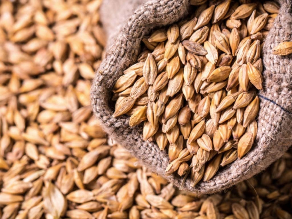 Tunisia tenders to buy 50,000 tonnes feed barley