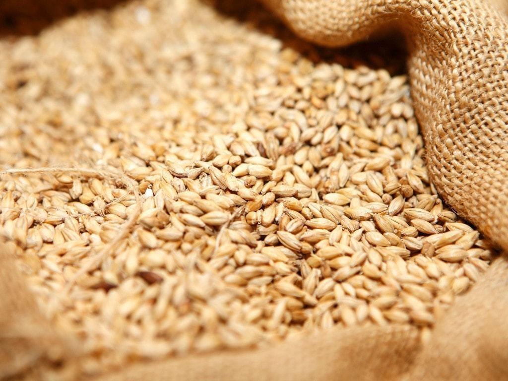 Wheat extends fall, corn rises ahead of USDA report