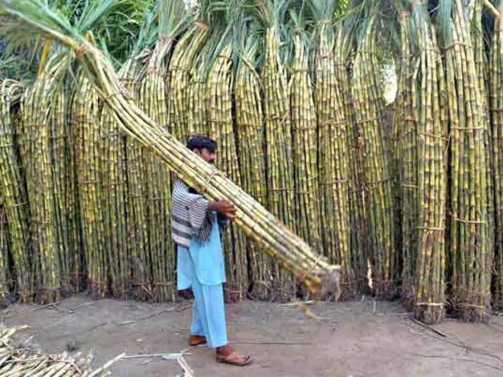 Early sugarcane-crushing season likely to help lower prices