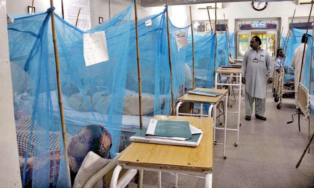 Dengue cases in Rawalpindi and Islamabad: Health experts urge people to take preventive steps