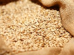 French soft wheat crop rating stable at nine-year low