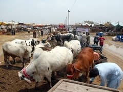 Cattle markets: Over 1,000 cops to be deployed