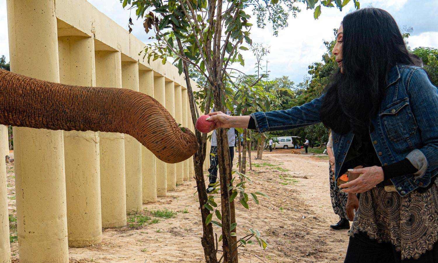 Kaavan will live life as an elephant, not a prisoner, says Cher