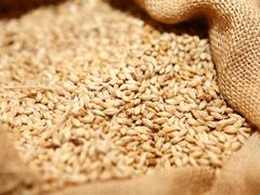 Avoiding the next wheat price spiral