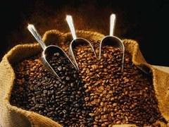 Arabica coffee slips