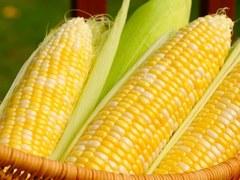 China corn output may rise