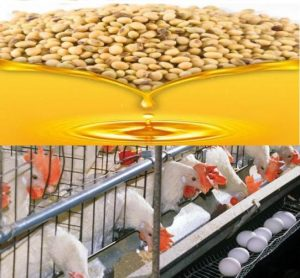 Soybeans and poultry