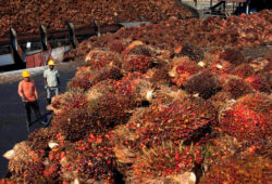 Pakistan keen to fill void after India's restrictions on Malaysian palm oil