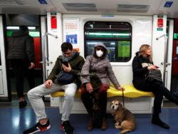 Hong Kong health authorities confirm pet dog tested positive for coronavirus