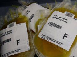 Pakistan permits cholorquine production, plasma therapy for coronavirus