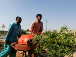 WEF lauds PM Khan's 'green stimulus' efforts