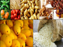 Food exports performance under lockdown